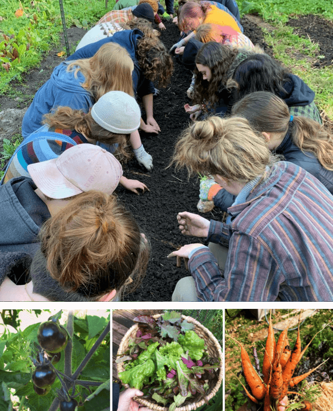 ED Bed picutes of students digging in dirt, cherries, salad bowl and carrots