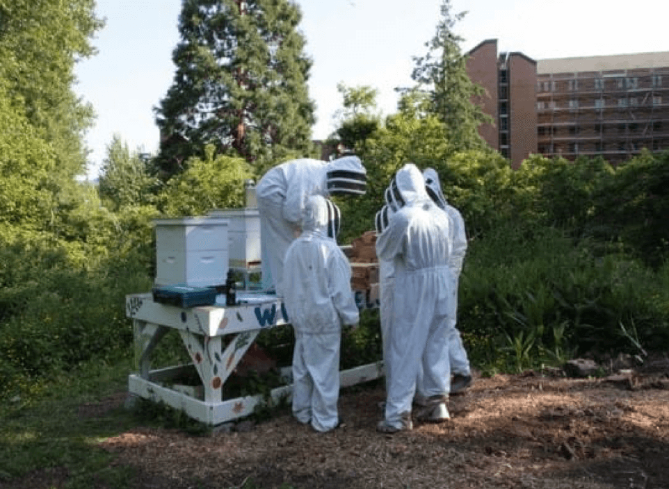 students in bee suits standing around a wooden bee hive