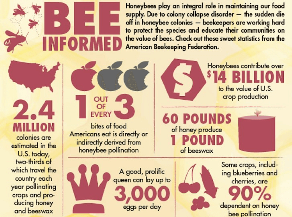 bee informed picture