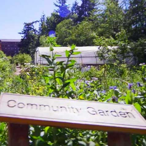 A lush summer view of the Community Garden in full bloom.
